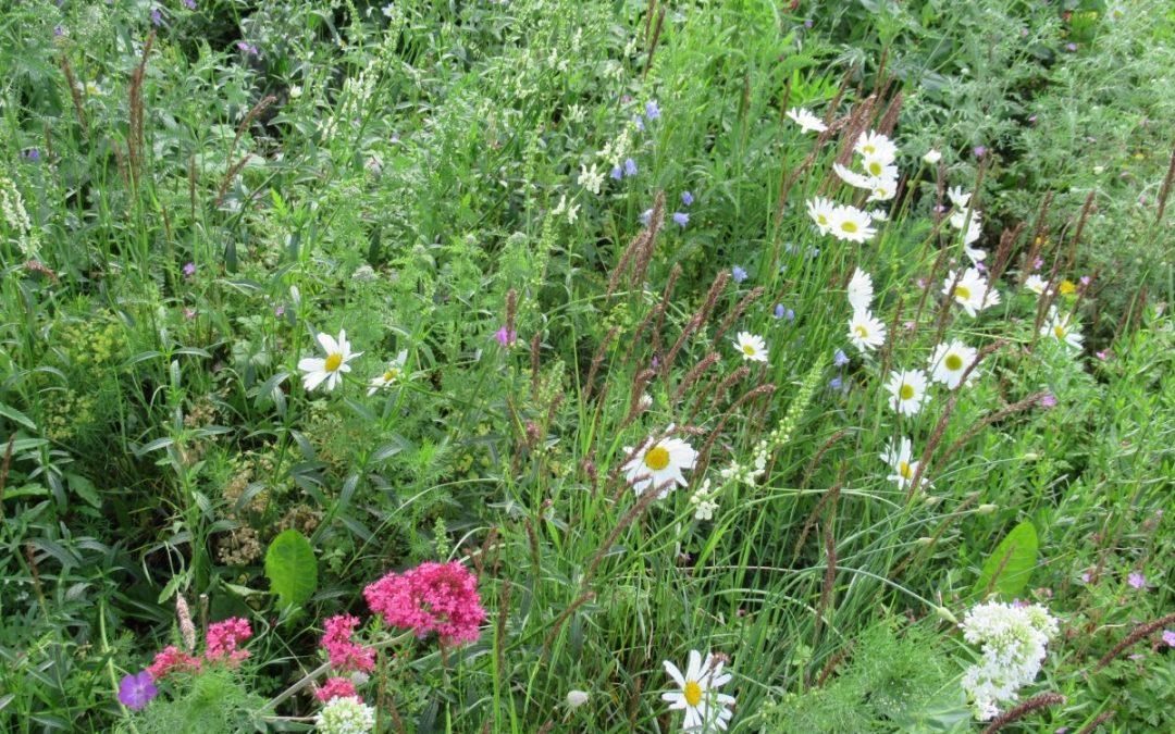 Ökologisches Grünflächenpflegemanagement für Kommunen