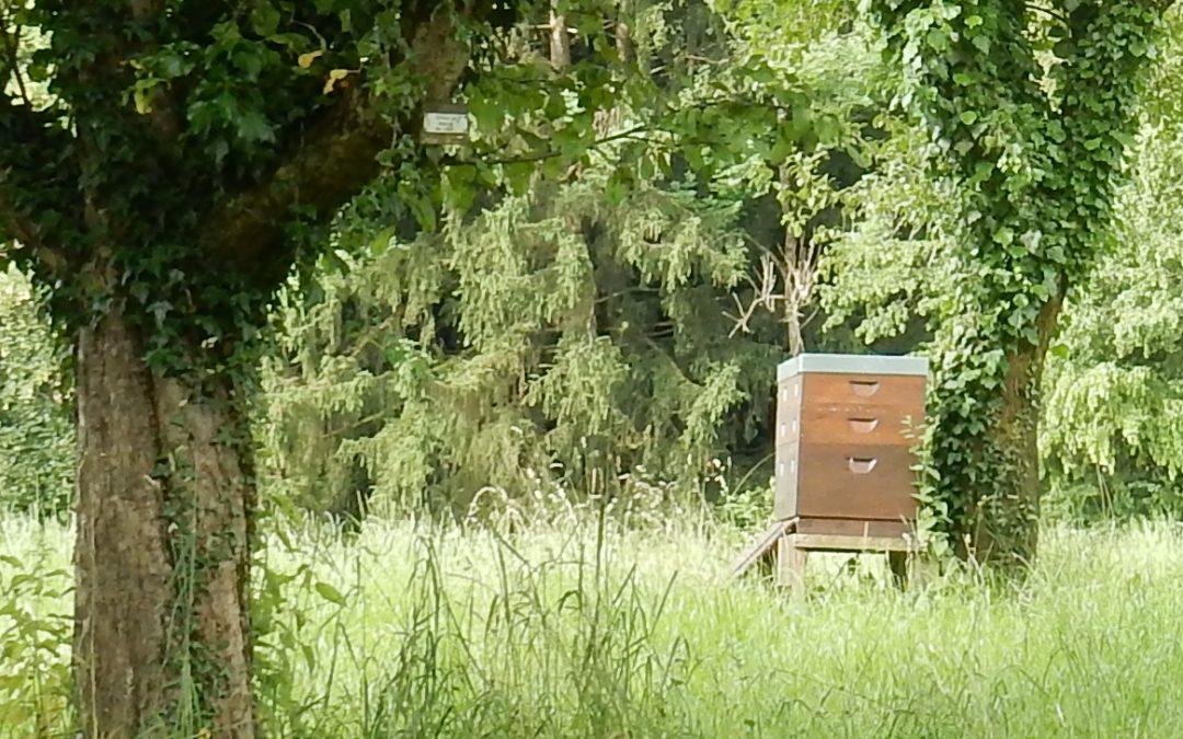 Lehrbienenstand mit Vereinsraum Frasdorf Aschau